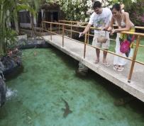bluewatermaribago-sharkfeeding_r