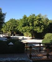 Mogambo Springs 9